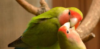 Lifestyle of Your Bird